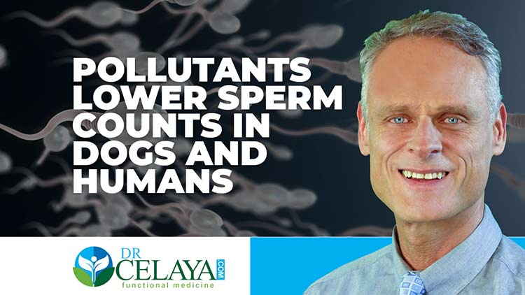 Pollutants lower sperm counts in dogs and humans